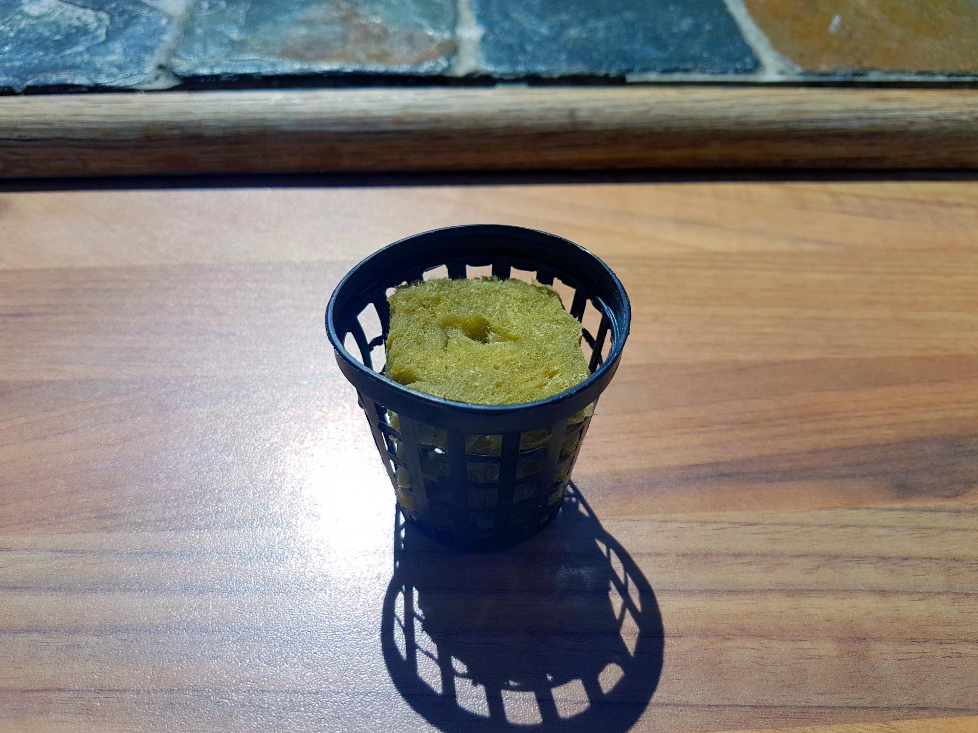 indoor-herb-garden-rockwool-in-netpot